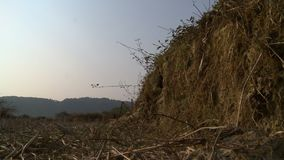 Dry and exposed forest landscape, Myanmar