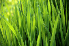 Close-up of lush green grass Stock Photos