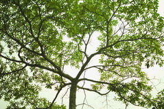 Close-up of lush trees branching royalty free stock photos