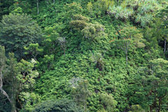 Close-up of lush tropical rain-forest hillside. On The Road to Hana, Maui, Hawaii, USA.  Great for backgrounds and textures Royalty Free Stock Images