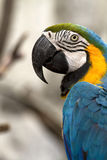 Close-Up Macaw Stock Images