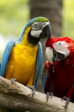 Close-Up Macaw Stock Photos