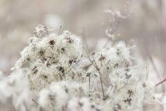 Close up macio da semente imagens de stock