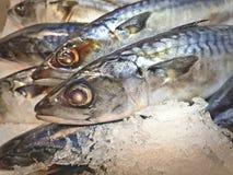 Mackerel Fish in Pile of Ice at Supermarket. Close-up Mackerel Fish in Pile of Ice at Supermarket Stock Photo