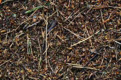 Close up macro anthill. Close view of the anthill in the forest Royalty Free Stock Photography