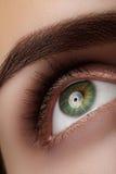 Close-up macro beautiful female eye with perfect shape eyebrows. Clean skin, fashion natural smoky make-up. Good vision Royalty Free Stock Image