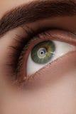Close-up macro beautiful female eye with perfect shape eyebrows. Clean skin, fashion natural smoky make-up. Good vision Stock Photography
