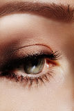 Close-up macro of beautiful female eye with perfect shape eyebrows. Clean skin, fashion naturel make-up. Good vision Stock Photos