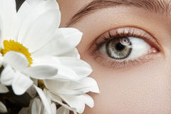 Close-up macro of beautiful female eye with perfect shape eyebrows. Clean skin, fashion naturel make-up. Good vision. Spring natur Stock Photography