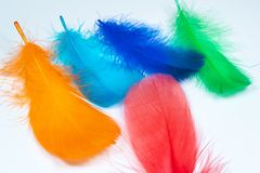 Colorful feather background royalty free stock images