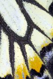 Close Up Macro Of A Butterfly Wing royalty free stock photos