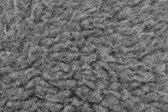 Close up macro de lãs cruas dos carneiros de Merino, grande fundo detalhado de Grey Textured Pattern Copy Space, Gray Texture hor imagem de stock royalty free