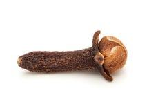 Close up macro de um cravo-da-índia preto orgânico Imagens de Stock