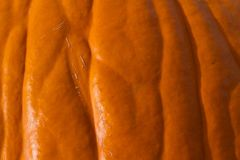 Close up Macro Detail Abstract Background Texture of a Pumpkin Stock Photo