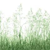 Close up macro detalhado isolado da grama de prado do verão fundo abstrato detalhado foto de stock royalty free