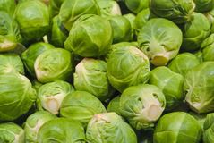 Close up macro of fresh green иrussels sprouts for sale on open royalty free stock images