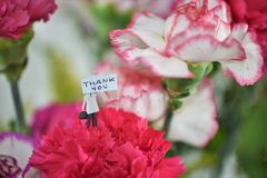 Colorful bunch of spring carnation flowers and miniature thankyou note. A close up macro image of a vibrant colorful bunch of carnation flowers and blur stock photo