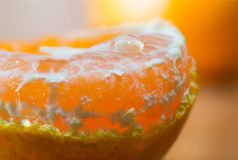 Close up macro peeled fresh orange fruit with juice coming out from orange pulps. stock image