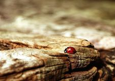 Close Up, Macro Photography, Wood, Organism Royalty Free Stock Image