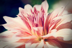 Close up macro pink flower. With light Stock Image