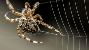 Spider building web stock images