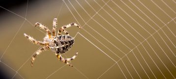 Spider building web royalty free stock photos