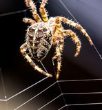 Spider building wed stock photo