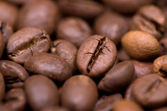 Close up macro shot of coffee bean Stock Photography