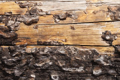 Burnt Tree Trunk Close Up Royalty Free Stock Photo