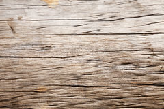 Tree Trunk Close Up Stock Photography