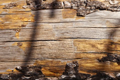 Tree, tree trunk, trunk, log, selective focus, focus on foregrou Royalty Free Stock Photos