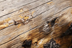 Tree Trunk Close Up Stock Photos