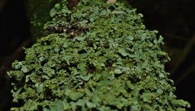 Close up macro shot of green lichen - UK stock images