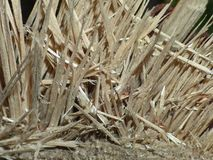 Close up macro of a shredded tree seen walking though country park in England stock images