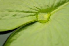 Close up macro shot water drop Stock Images