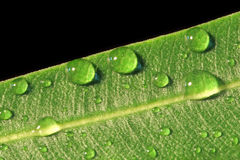 Close up macro shot of water droplets on a green leaf. Royalty Free Stock Photos