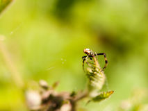 Close up macro of a spider on top of a leaf with legs and body i Stock Photos