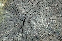 Close up, macro. The texture of the old, cracked wood. Slice, visible circles