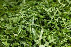 Close-up macro verse groene geselecteerde bladeren van arugulakruid Conceptendieet, vegetarische, natuurlijke, low-calorie maalti stock afbeelding
