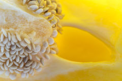 Close up macro of a yellow bell pepper Royalty Free Stock Image