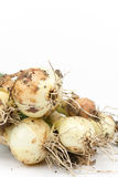 Close up macro young onions with soil Stock Photo