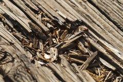Close up madeira velha de placas de plataforma resistidas do pátio fotografia de stock