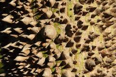 Close up magnífico do horizii do tronco Foto de Stock Royalty Free