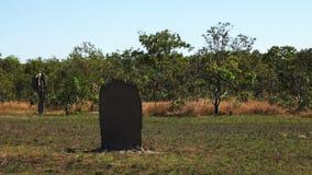 Close up of magnetic termite mound in Australia