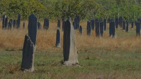 Close up of magnetic termite mound in the northern territory