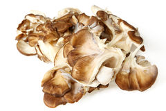Close Up Of Maitake Mushrooms Royalty Free Stock Photo