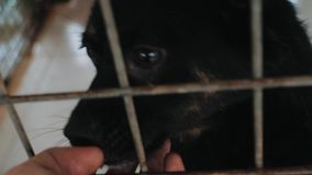 Close-up of male hand petting caged stray dog in pet shelter. People, Animals, Volunteering And Helping Concept. 4K close-up of male hand petting caged stray stock footage