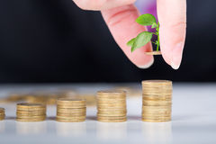 Close up male hand stack tree on coins bar. Stock Image