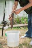 Draught of fish Royalty Free Stock Photo