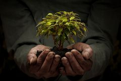 Male hands holding small tree stock photography